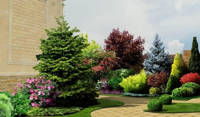 Композиции из лиственных и хвойных деревьев