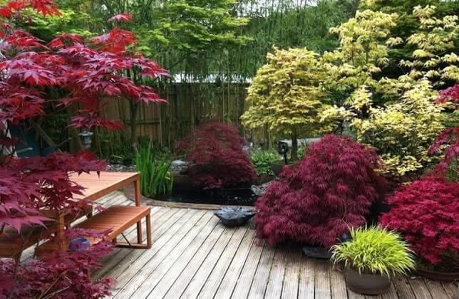 Лиственные деревья и кустарники в ладшафтном дизайне
