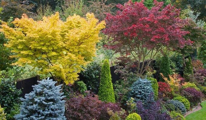 декоративные деревья и кустарники в ландшафтном дизайне