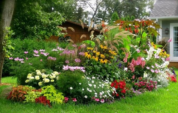 высокорослые цветы в клумбе